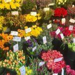 【注目】世界に一つだけの花。自己投資でもオンリーワン!?の考え方。