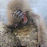 【同感】反省するなら猿でもできる!?アフターコロナの社会の自己投資。